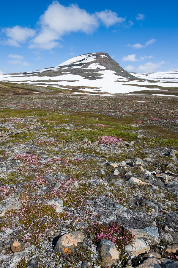 paysage de toundra couvertes de fleurs